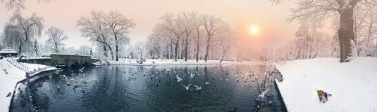 Birds and a dog on the winter lake in the park. After a heavy snowfall, the fabulous beauty of the morning winter old park in Europe, Ukraine among the beautiful stock images