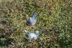 Birds dove basking in the sun. In autumn. Near river royalty free stock photos