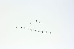 The birds Stock Photography