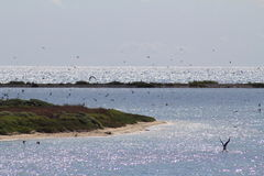 Birds at Dry Tortugas National park Stock Images