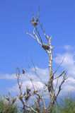 Birds on dry tree Stock Images