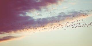Birds at dusk Stock Photo