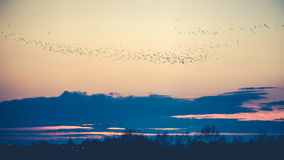 Birds at dusk Stock Images
