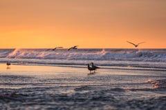 Birds early morning on the oceanfront. Atlantic Ocean coastline near New York in the area of Rockaway Park Stock Photos