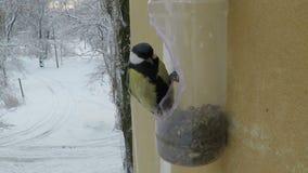 Birds eat from the feeder. Bird feeding at backyard feeder stock video footage