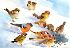 Birds eat. The seeds on the snow Stock Image