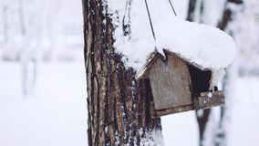 Birds eating seed from bird feeder in the winter park. Wooden handmade bird feeder in winter snow cold day royalty free stock images