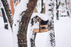 Birds eating seed from bird feeder in the winter park. Wooden handmade bird feeder in winter snow cold day stock image