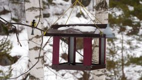 Bird feeder in the park. Birds eating seeds from the feeder, winter day stock video