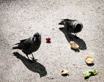 Birds eating the vegetable on the ground, light and shadow Royalty Free Stock Image