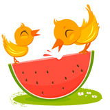 Birds eating watermelon Royalty Free Stock Image