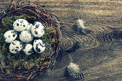 Birds eggs in nest over wooden background vintage. Birds eggs in nest over rustic wooden background. Vintage style toned picture Royalty Free Stock Images