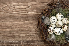 Birds eggs in nest on rustic wooden background Stock Photography
