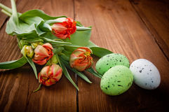 Birds eggs in nest with tulip flowers Stock Photos
