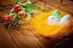 Birds eggs in nest with tulip flowers Royalty Free Stock Photo