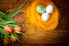 Birds eggs in nest with tulip flowers Royalty Free Stock Photography