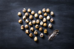 Birds eggs still life.Easter card. Stock Images