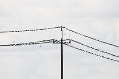 Birds on Electric Cable Stock Photography