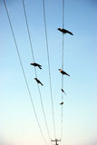 Birds on electric tower Stock Photos