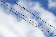 Birds on the electric wire Stock Photos