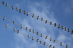 Birds on electric wire Stock Images