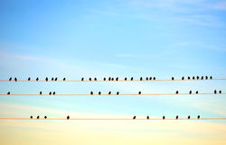 Birds on electric wire Stock Photos