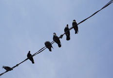 Birds on the electric wires. Under blue sky at sunny day royalty free stock photos