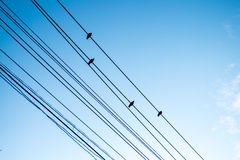 Birds on electric wires Royalty Free Stock Photos