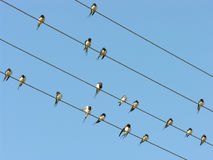 Birds on electrical wires. On the sky background Royalty Free Stock Photo