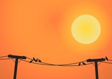 Birds on electricity post before sun set Stock Photos