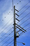 Birds on Electro wire tower Royalty Free Stock Photo