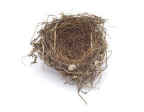 Birds empty nest. On white background Stock Images
