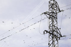 Birds Energy Tower Stock Photography