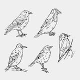 Birds engraved style. Stamp, seal. Simple sketch. Stock Image
