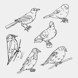 Birds engraved style. Stamp, seal. Simple sketch. Royalty Free Stock Photos