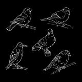 Birds engraved style. Stamp, seal. Simple sketch. Stock Photography