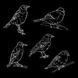 Birds engraved style. Stamp, seal. Simple sketch. Stock Images