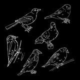 Birds engraved style. Stamp, seal. Simple sketch. Royalty Free Stock Photography