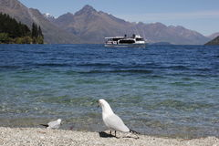 Birds enjoying the shores of Lake Wakatipu Stock Photos