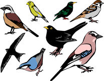 Birds Stock Image