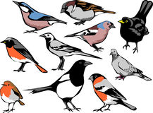 Birds. European common birds - color illustrations Royalty Free Stock Images