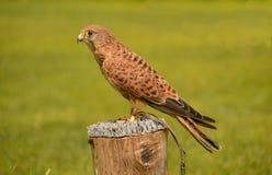 Birds 001 Stock Image