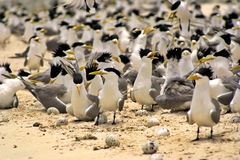 Birds Everywhere Stock Photo
