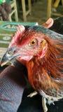 BIRDS EYE stock image
