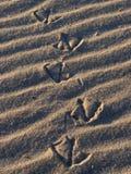 Birds Eye Path. Bird foot print path on ripple sand at the ocean stock photo
