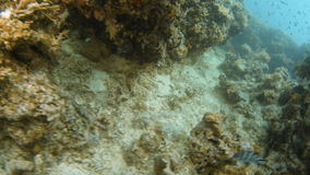 Coral reef and fishes underwater. A birds eye view of coral reef stock footage