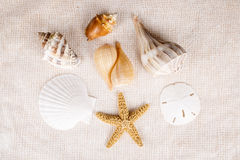 Birds Eye View of Seashells Stock Images