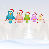 Birds family at Christmas Stock Photos