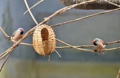 Birds family Stock Image