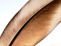 Birds feather 2 Stock Photography